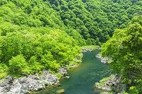 福井県 新緑の九頭竜川