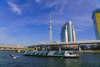 東京都 カモメと水上バスと東京スカイツリー
