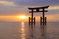 滋賀県 琵琶湖の日の出 白髭神社 湖中大鳥居