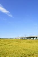 新潟県 秋の田園風景と高架橋