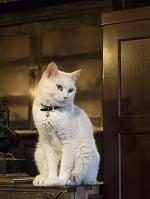 奈良県 猫