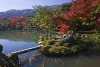 京都府 京都市 天龍寺の曹源池