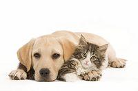 寄り添う子犬と子猫