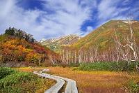 長野県 栂池自然園