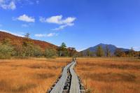 群馬県 尾瀬ヶ原の草紅葉と燧ヶ岳