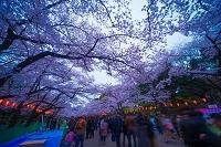 東京都 上野公園 花見 夜景
