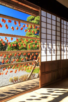 山梨県 甘草屋敷と干し柿