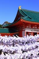 京都府 お正月の平安神宮のおみくじ