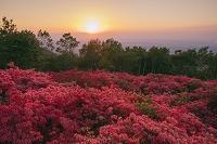 青森県 ヤマツツジ咲く階上岳と夕日