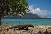 インドネシア コモド島