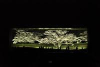 千葉県 夜桜屏風