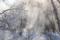北海道 朝の釧路川畔の霧氷