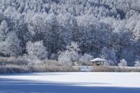 長野県 霧氷の中牧湖