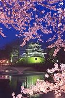新潟県 高田公園 高田城三重櫓 桜