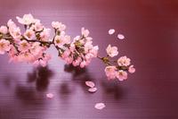 お盆と桜の花
