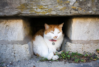 隙間でくつろぐ猫