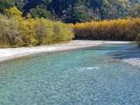 長野県 梓川とカラマツ林