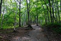 長野県 乗鞍高原の森