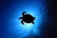 座間味 ウミガメのシルエット 水中のイメージ