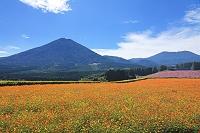 宮崎県 生駒高原 夷守岳とコスモス