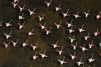 南アフリカ コフラミンゴ