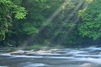 熊本県 菊池渓谷と森