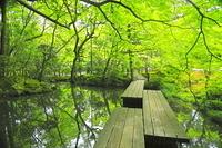 京都府 新緑の天授庵