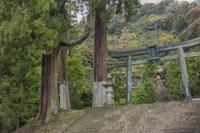 妙義神社 鳥居と杉の木(天狗の腰かけ)