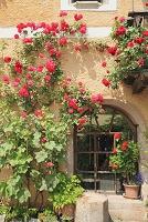 ハルシュタット 窓辺の花