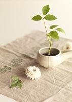 白い器に植えたグリーンの観葉植物