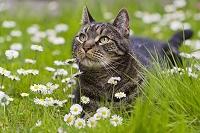 ドイツ 花畑の中の猫