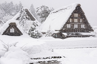 岐阜県 雪の白川郷荻町合掌造り集落 明善寺庫裡