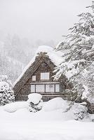岐阜県 雪の白川郷荻町合掌造り集落 和田家