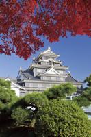 岡山県 岡山城の紅葉