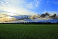 新潟県 ばんえつ物語(SL・C57蒸気機関車) 夕日と田んぼ