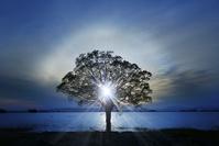 青森県 津軽富士見湖畔に立つ1本の樹と日輪