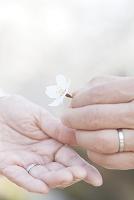 桜の花びらを持つシニア夫婦