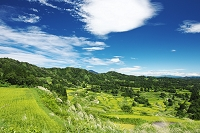 新潟県 星峠の棚田