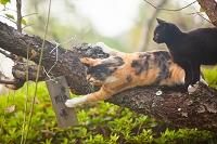 開運の札に触る猫
