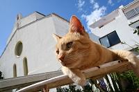 スペイン カダケスの猫