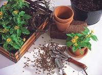 ガーデニング、植木鉢と花の苗