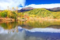 長野県 秋の乗鞍高原 まいめの池と乗鞍岳の秋