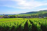 フランス ブドウ畑
