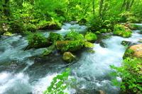 青森県 新緑の奥入瀬渓流・阿修羅の流れ