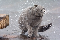 雪を振り払う猫