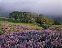 アメリカ合衆国 カリフォルニア レッドウッド国立公園