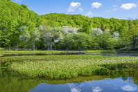 長野県 新緑のあざみ池