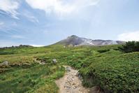 北海道 初夏の旭岳 自然探勝路