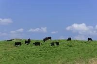 岩手県 高清水高原 黒毛和牛