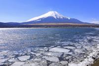 山梨県 冬の富士山と山中湖畔を漂流する氷塊